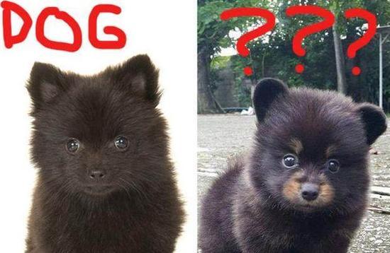 扎心了老铁!村民把黑熊当狗养了3年 差点被处罚