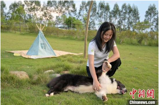 图为宠物主人带狗狗到宠物乐园玩耍。 俞靖 摄