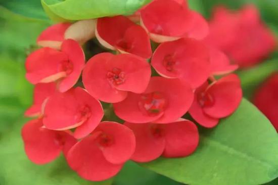 邀你去赏花!烂漫五月 北海园博园内花开正盛(图)