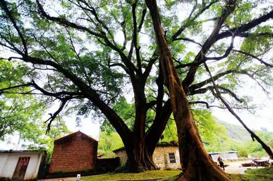 贺州钟山县一个被山石古树环绕的村庄(图)