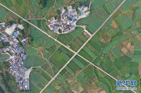 """位于广西鹿寨县中渡镇大兆村的""""祥荷乡韵""""千亩莲花基地(8月22日无人机拍摄)。"""
