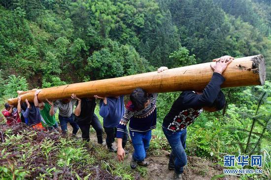 黔桂乌英苗寨,群众在扛木头,准备建新木楼(6月1日摄)。新华社记者 黄孝邦 摄
