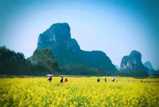 平桂区鹅塘镇芦岗村的油菜花