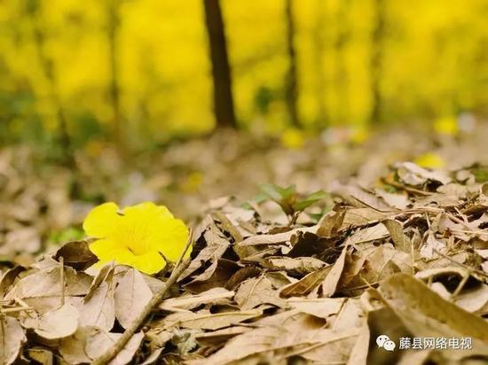 梧州又上央视啦!花树有约 一期一会一岁一面(图)