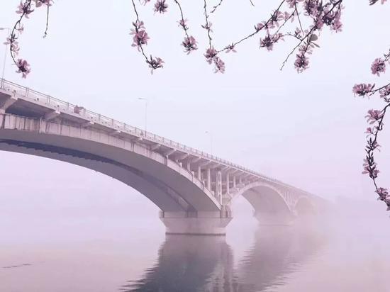 仙境!柳州的雨中紫荆花VS夜色紫荆花谁更醉人(图)