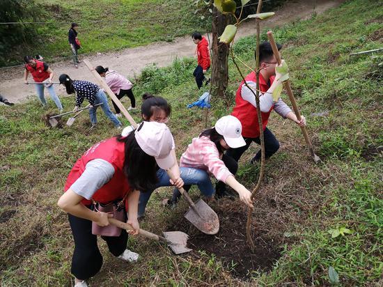 植树活动现场