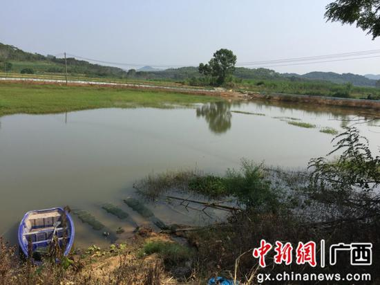 柳州市悦鑫水产养殖专业合作社小龙虾繁殖基地