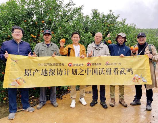 在武鸣区双桥镇杨李村伏马屯,全国知名农业专家、学者来到实地了解武鸣沃柑