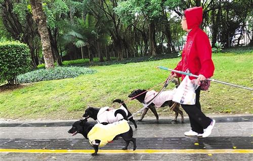 一个人同时遛三只狗