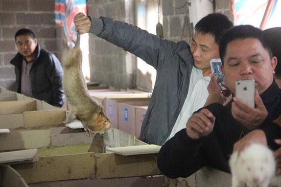 学员动手抓竹鼠