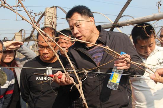 学员学习葡萄枝条裁剪