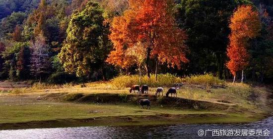 新浪微博:@广西旅游发展委员会