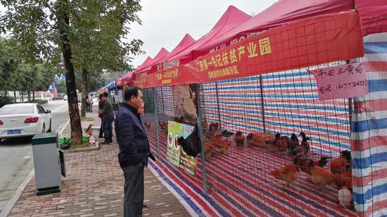华南城年货节第一书记基地直供活禽展示区