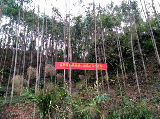 森林中的防火提醒