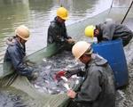 别人家学校又来分鱼了!广西医科大3000斤鱼免费吃