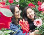 南宁青秀山五一展出20多万株珍稀玫瑰 等你来赏