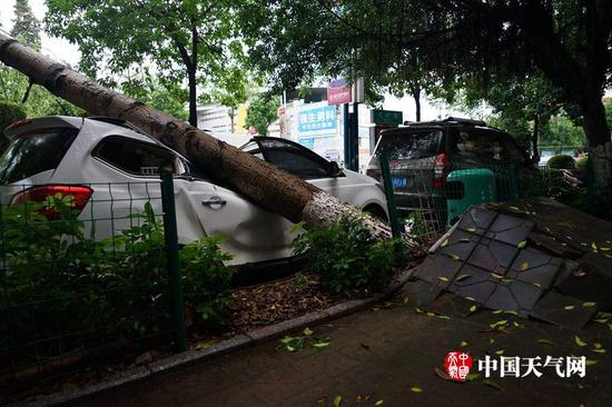 梧州遭遇9级风 大树被吹倒汽车被压(图)