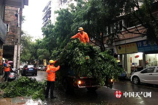 有关部门正清理被吹倒的树木(摄影:郑羡仪)