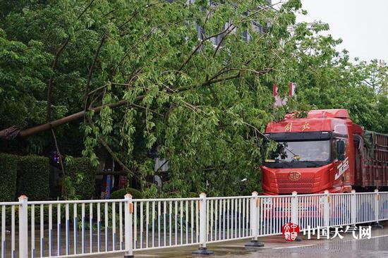 吹倒的大树让大型车辆通过缓慢(摄影:梁妙芝)