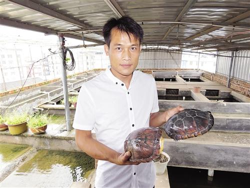 通过不断学习,黄飞达掌握了龟鳖养殖技术