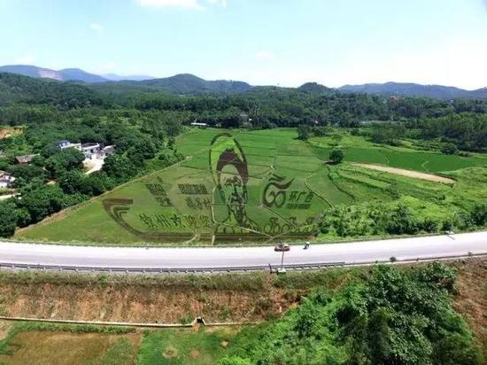 惊呆了!钦州居然有如此惊艳的稻田艺术(图)
