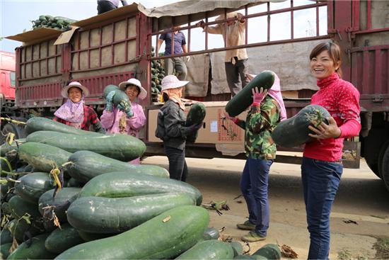 来宾现代农业产业园的生态冬瓜装车代运