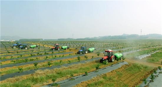 来宾现代农业产业园内的海升集团柑橘基地