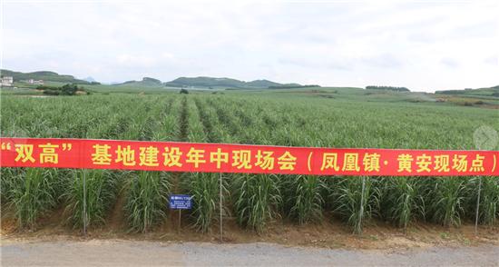 """来宾现代农业产业园的""""双高""""糖料蔗基地"""