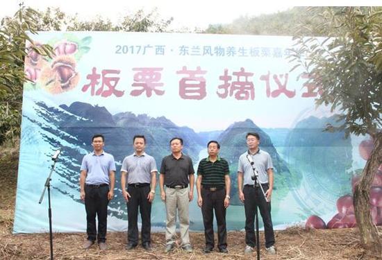 2017广正西·东方兰景物养生板栗嘉年华——板栗首摘仪式浩瀚举行