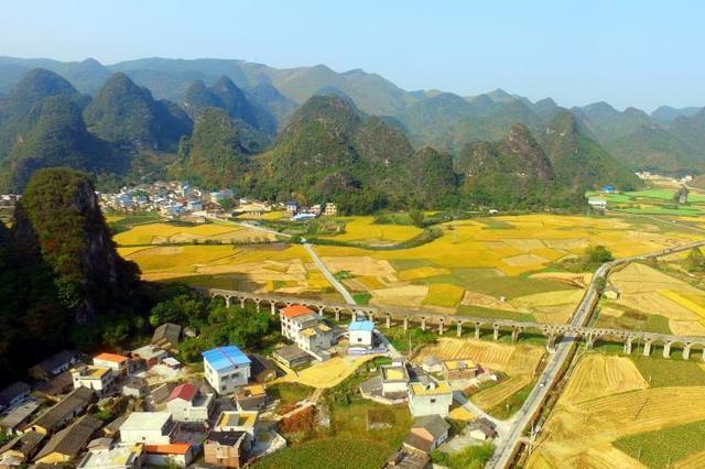 航拍:广西柳州万亩稻田披金美如画(多图)