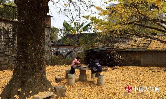 孩童在小园的满地金黄里玩耍(摄影:袁马强)