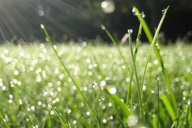 广西桂北将出现明显降雨 细雨轻飘仍微凉