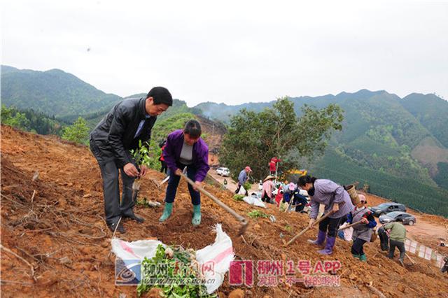 百万富翁隐居三江深山9年 种千亩油茶树带领村民致富