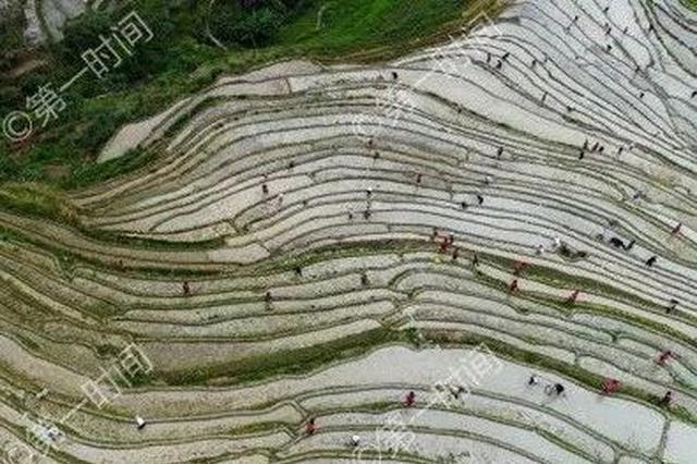 去哪里玩?桂林这两个地方的水田分分钟让你着迷