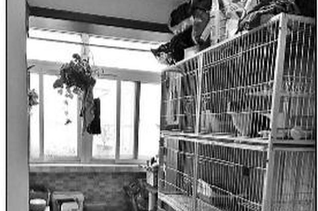 """""""家庭寄养宠物""""走红背后有隐忧:宠物猫每天20元"""