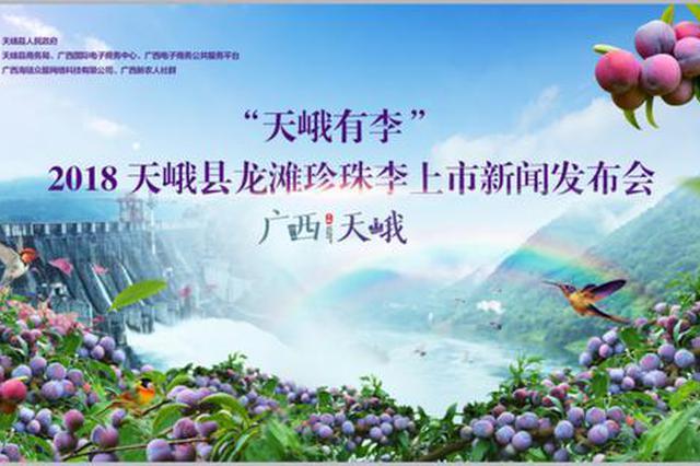 天峨2.5万吨龙滩珍珠李正式采摘进入全国市场