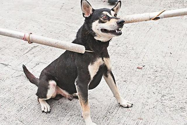 一流浪狗咬伤三村民 市民建议追责遗弃犬只主人