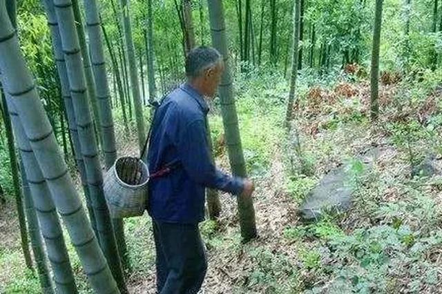 桂林63岁村民被查出糖尿病 自采草药生食后呕吐昏倒