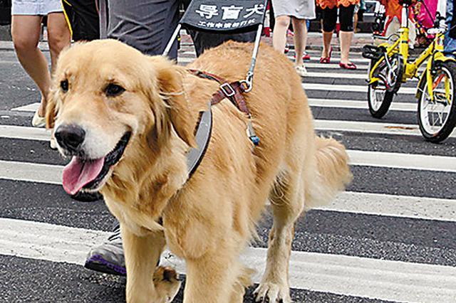 """携导盲犬出行不顺:还需破除哪些""""障碍"""""""