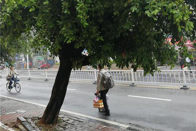 吓人!桂林这地方一棵榕树摇摇欲坠 让人看了心惊肉跳