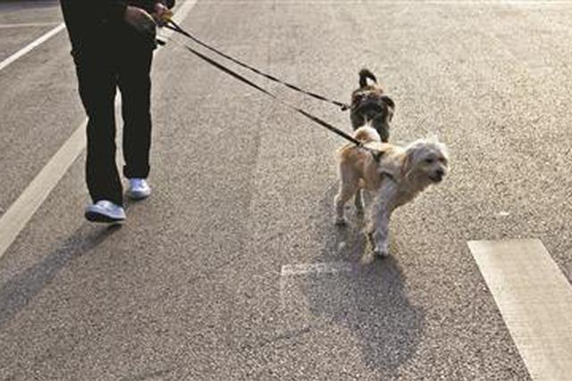 """犬只伤人致纠纷频发 多地出台""""最严""""犬类管理条例"""