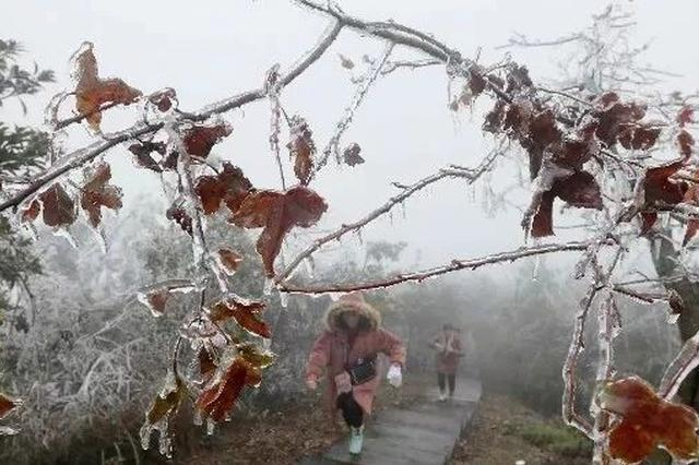 最低-2.6℃!柳州融安出现冰凌雾凇景观 恍如仙境