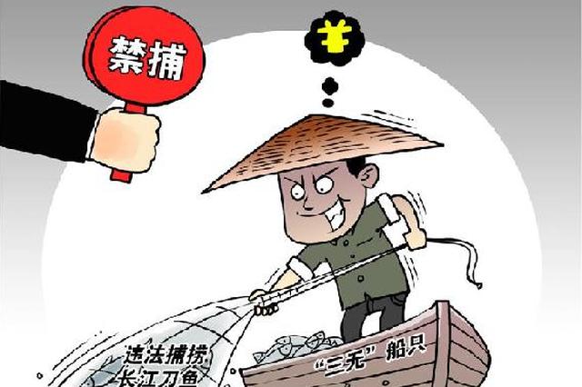 3两多一条1680元!禁捕的长江刀鱼为何公然售卖?