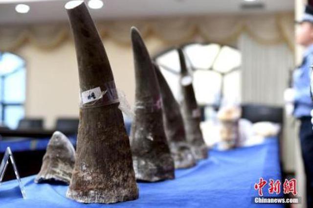 海关打掉跨国走私团伙 涉案犀牛角达333.8千克
