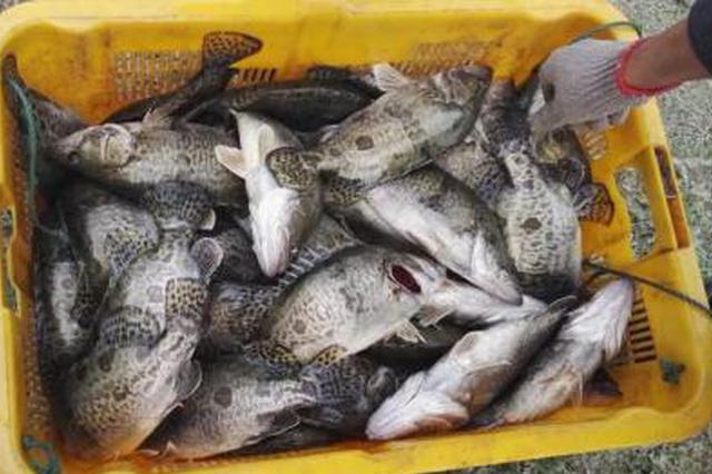 水库偷鱼被阻 纠集多人殴打看守人!6名被告领刑罚