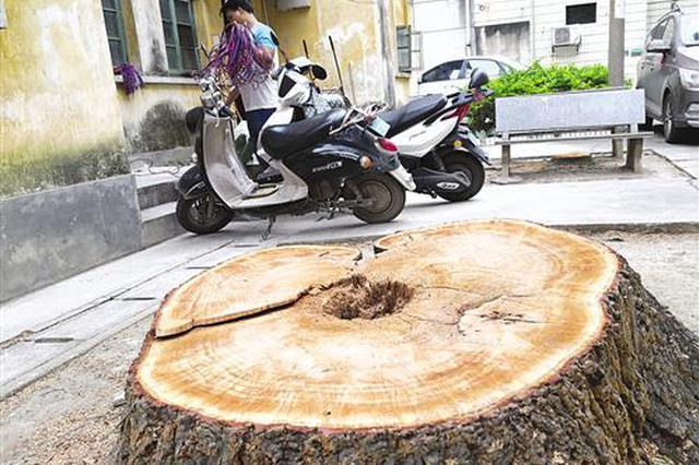 邕一小区物业没获审批砍树 10棵绿树仅剩树干或树墩