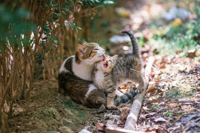 拍摄六年攒下超四万张照片 他靠给猫拍照走红