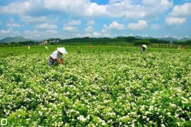 广西一批农产品优势企业出国吆喝 首站将赴马来西亚