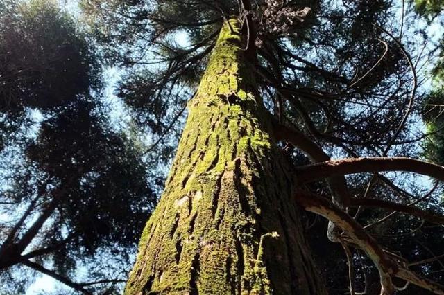 贵港一大波平天山国家森林公园航拍美图流出