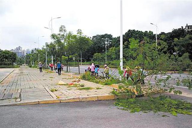 强降雨致树木倒伏 南宁园林部门:大部分都能抢救
